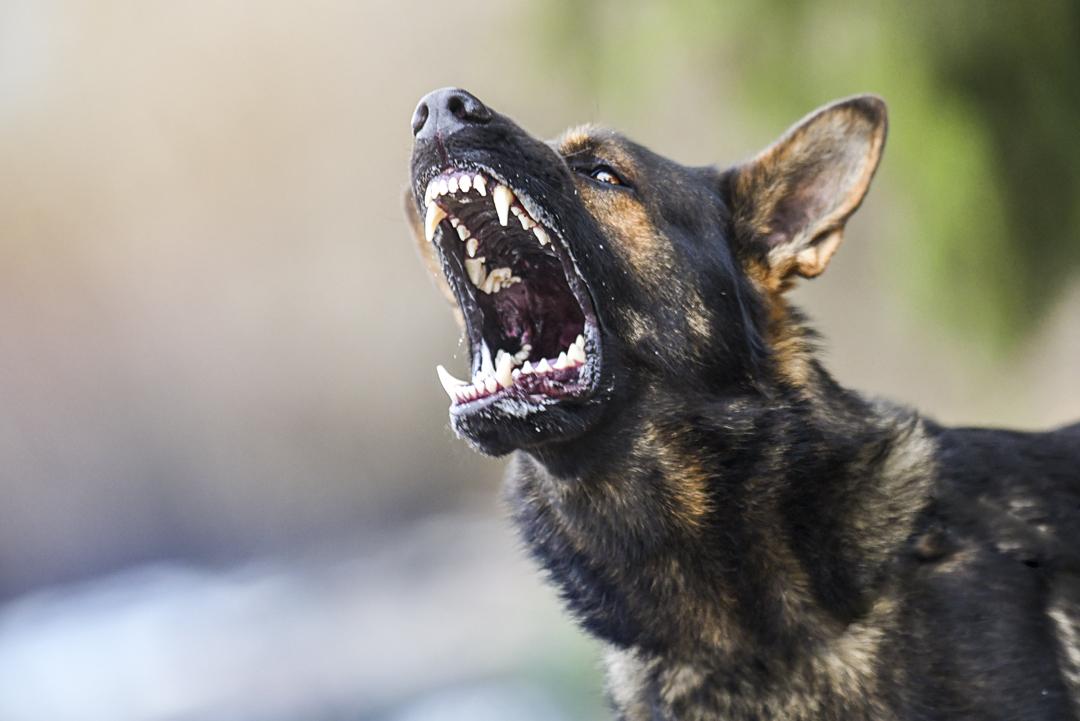 injury-angry-dog-bite